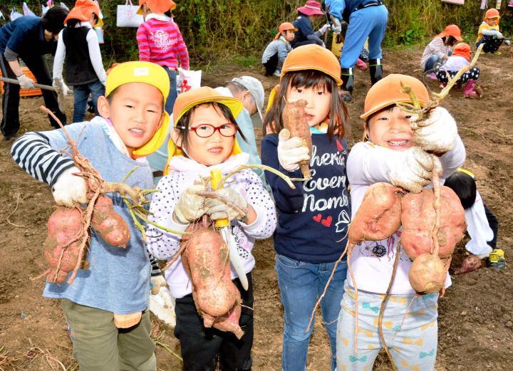 大きなサツマイモを収穫した保内保育所の園児