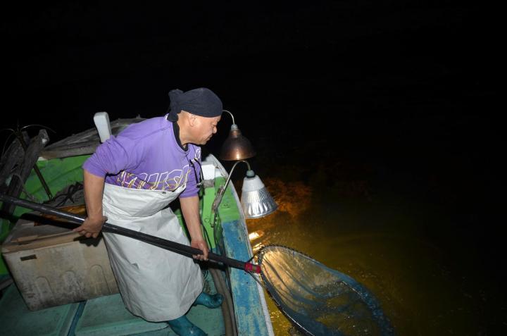 昔ながらの「ドロメ漁」続ける 愛南の久徳さん イワシの稚魚