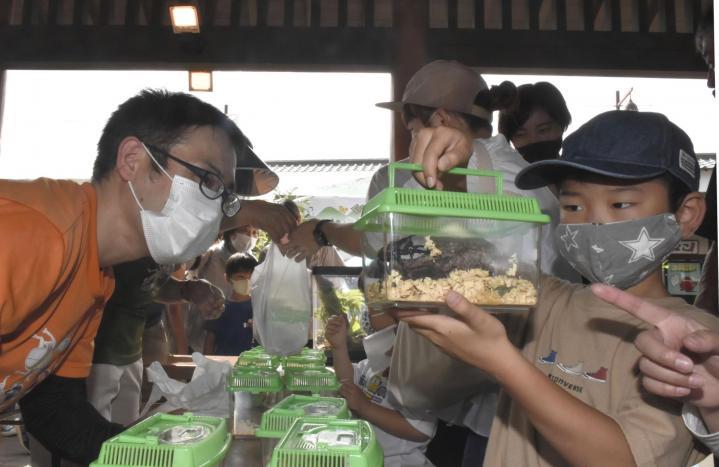 里山の虫、親しんで カブトムシとクワガタ計100匹配布 伊予市の3団体