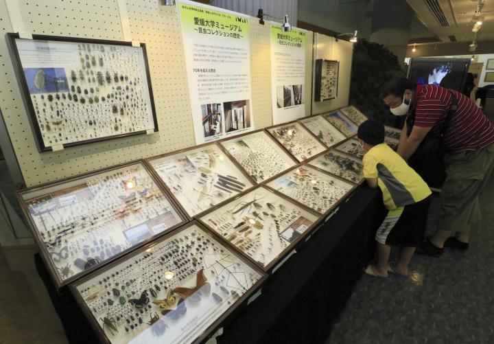 面河山岳博物館で企画展始まる 8月29日まで 昆虫標本1万5千点以上